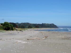 Schwemmholz NZ